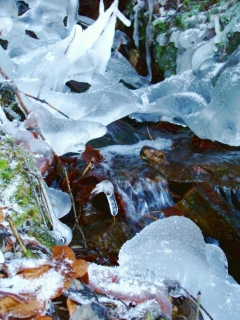 Zamrzlá