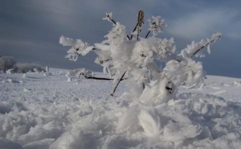 Na-sněhu