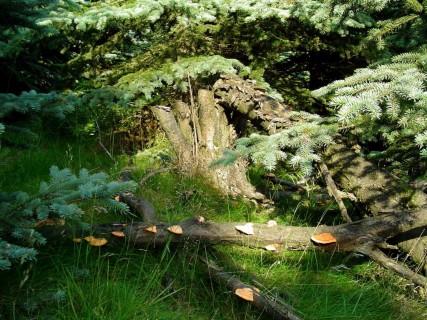 Ztracená-v-lese