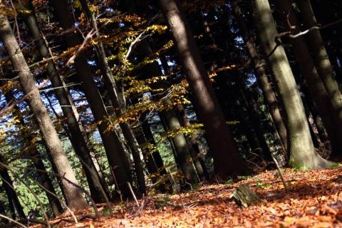 Veselý-les