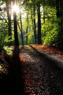 Ráno-v-lužickém-lese