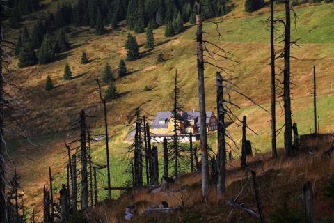 Chaloupka-za-stromy