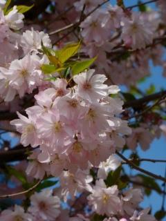 Růžové-jaro