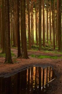 Svítání-v-lese