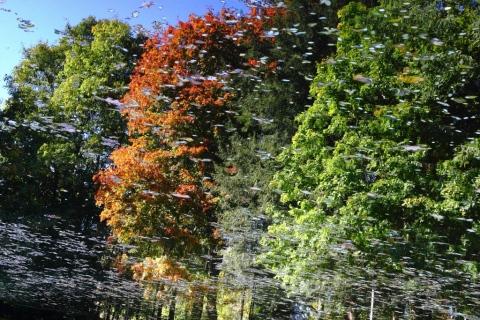 Podzimní-symfonie